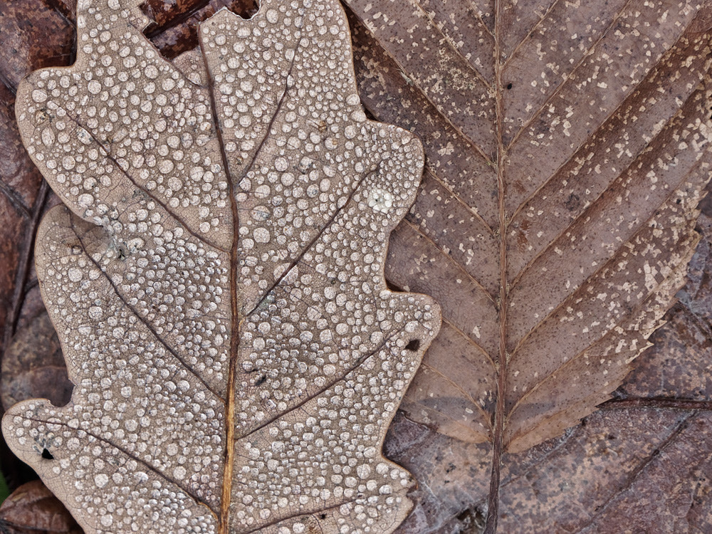 Photograph leaves in november by Manfred Huszar on 500px