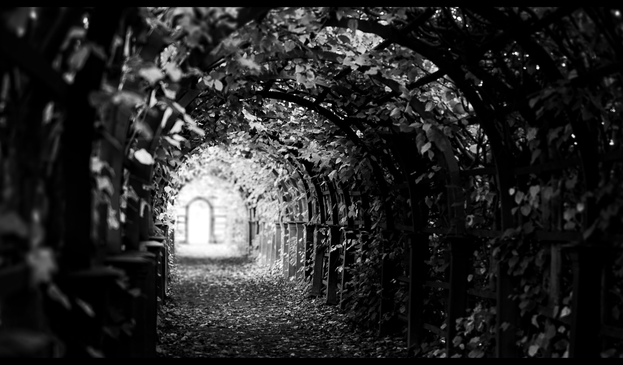 Photograph Tunnel. by Frank Schillinger on 500px
