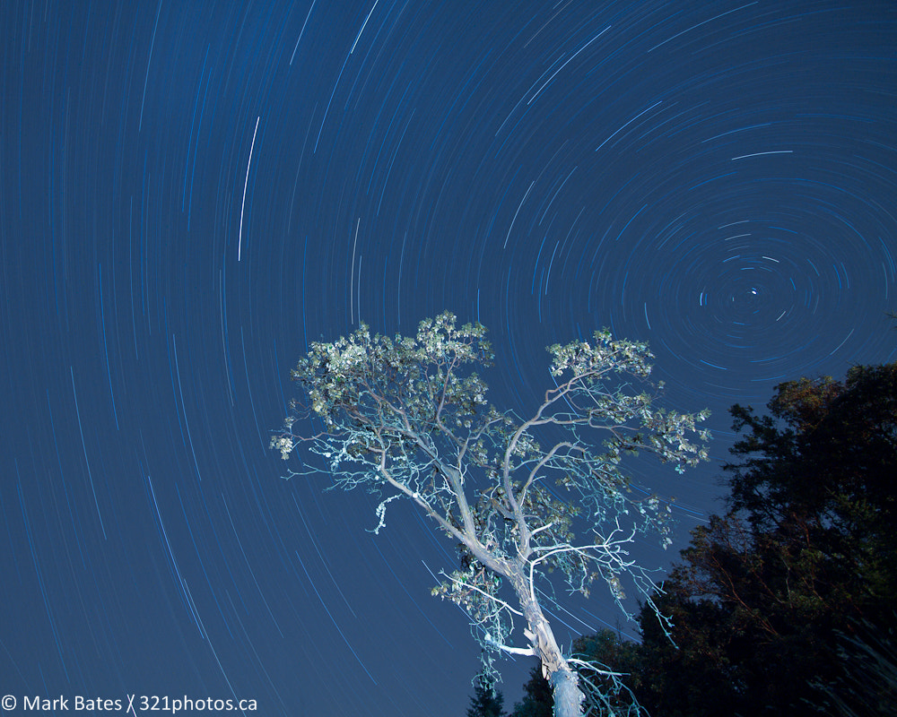 Photograph Arbutus at Night by Mark Bates on 500px