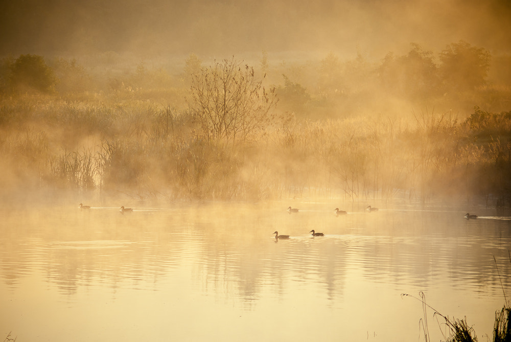 Photograph Ducks in the fog by Rafał Makieła on 500px
