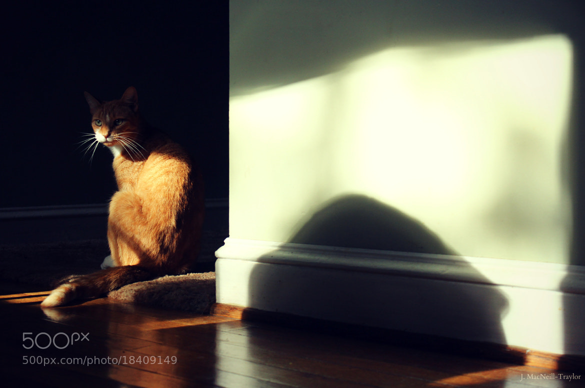Photograph shadow cat by Jennifer MacNeill Traylor on 500px