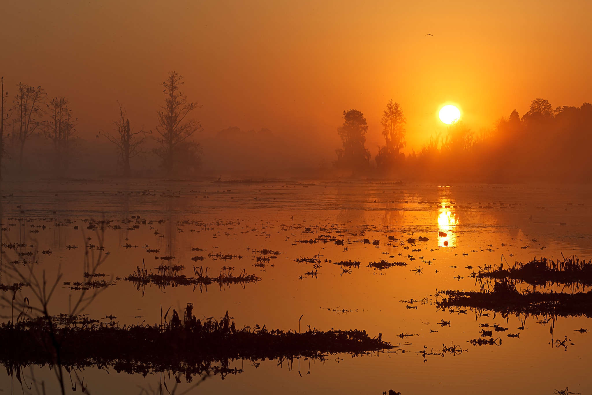 Photograph Misty Morning Marsh by Daniel Kaufman on 500px