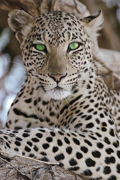 Photograph Green eyes by Saeed Hassan on 500px
