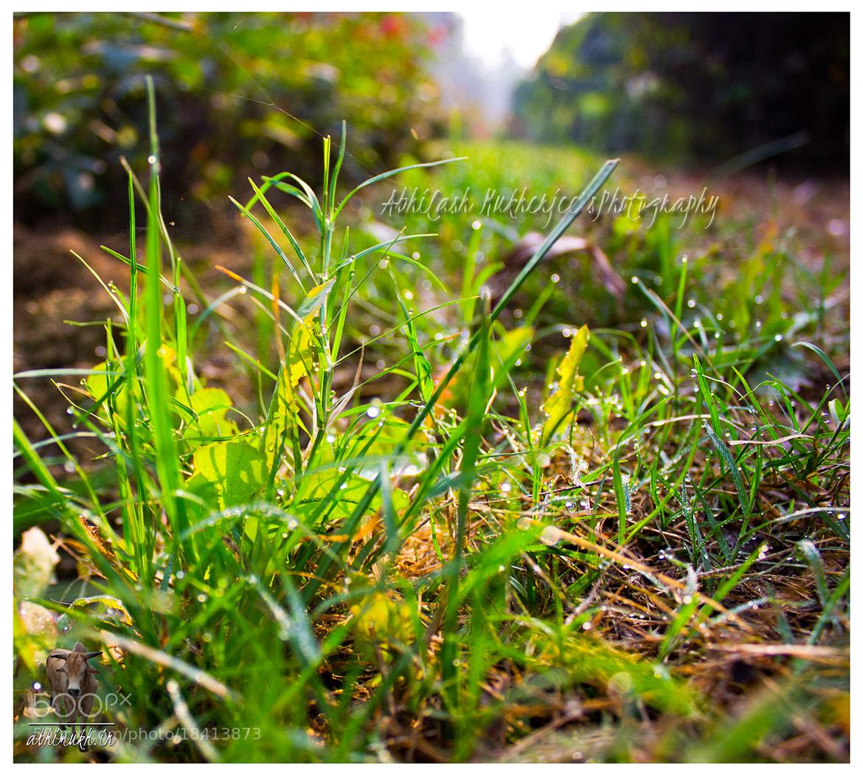 Photograph Grass & Dew by Abhilash Mukherjee on 500px