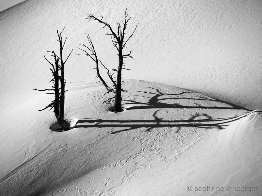 Two dramatic burned trees in the snow.