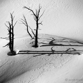 Winter Snags by Scott  Rinckenberger (scottrinck)) on 500px.com