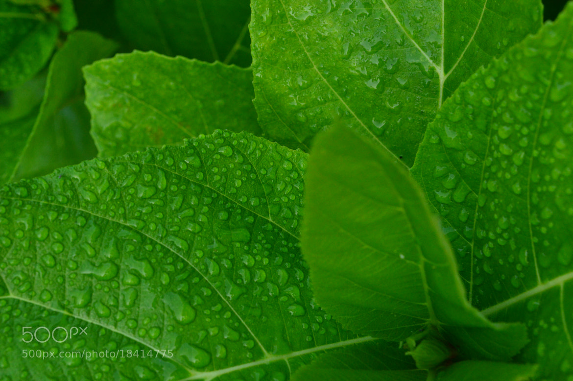 Photograph Morning green by sajan Laks on 500px