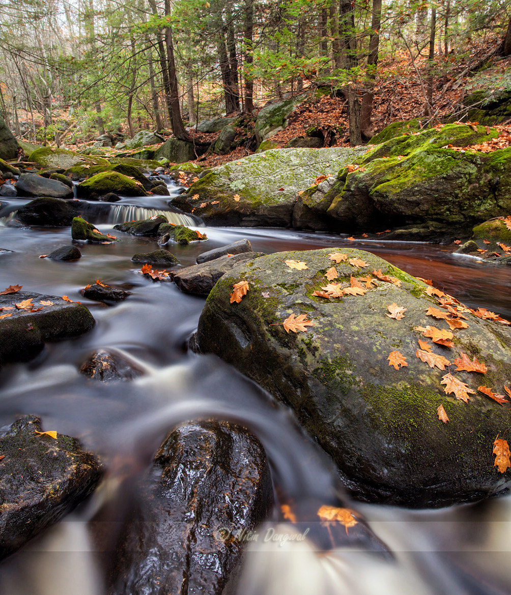 Photograph Memoirs of fall by Nitin Dangwal on 500px