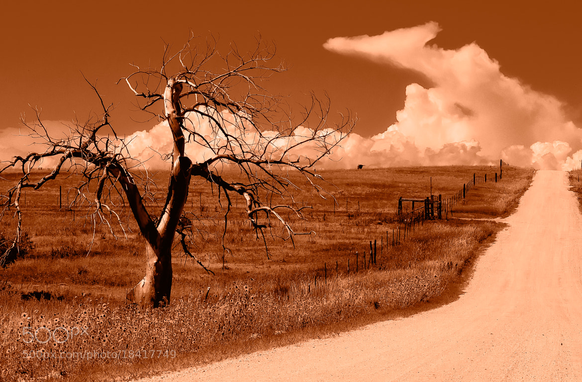Photograph Desolation Road by Eric Piercey on 500px