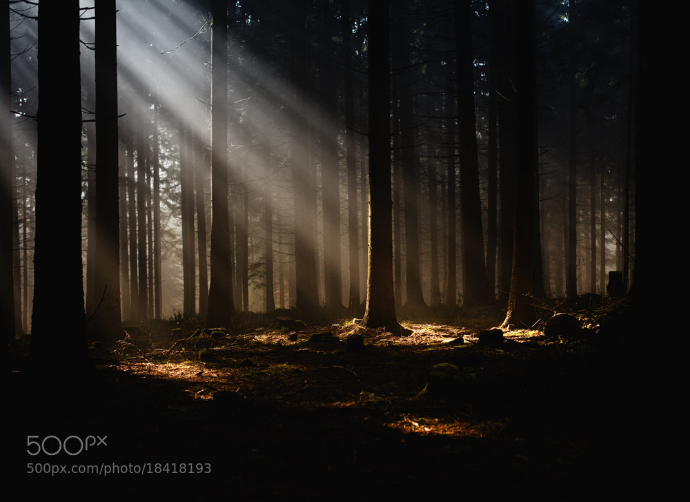 Photograph a fairytale morning by Martin Waldbauer on 500px