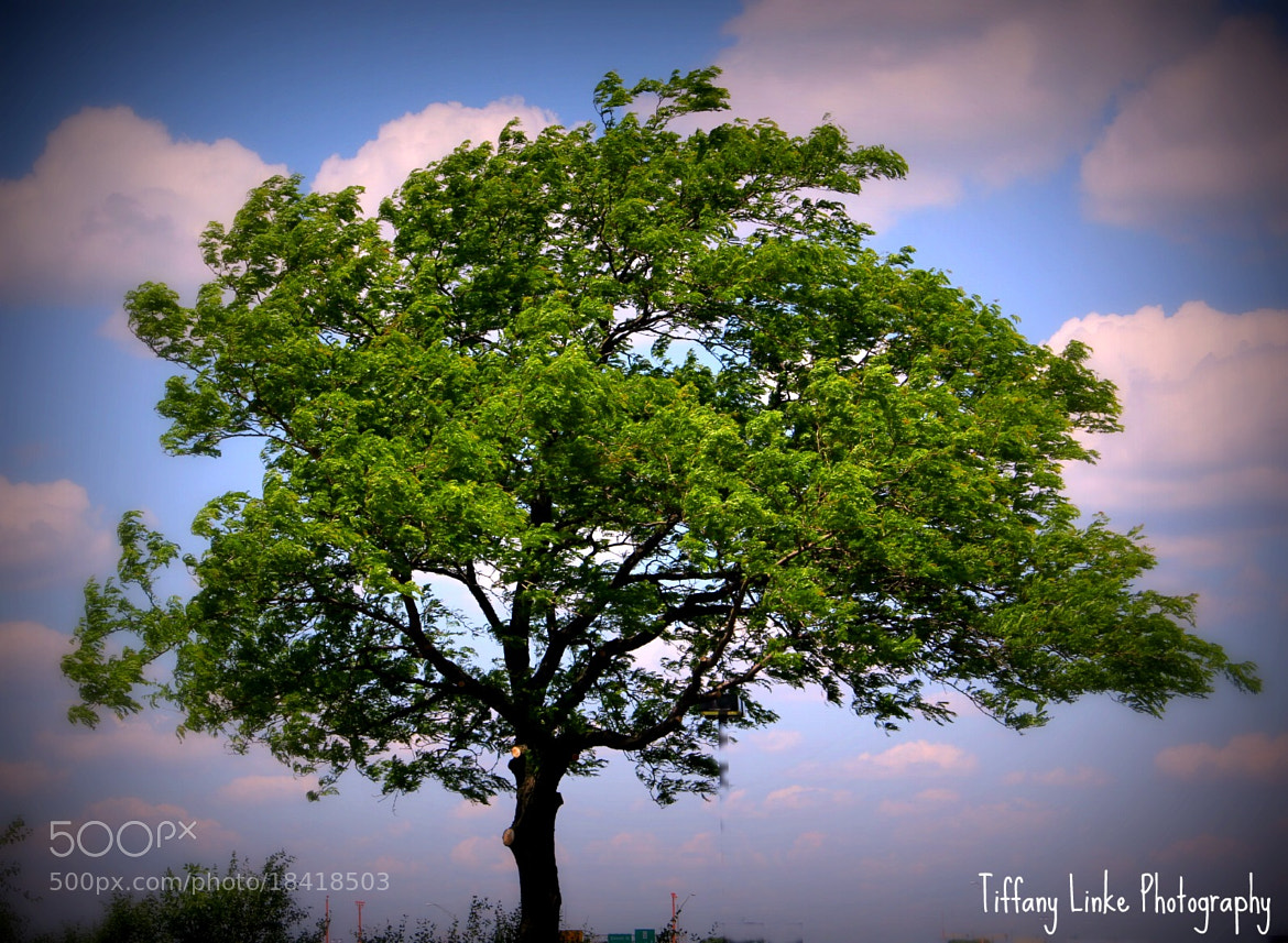 Photograph Lone Tree by Tiffany Wright on 500px