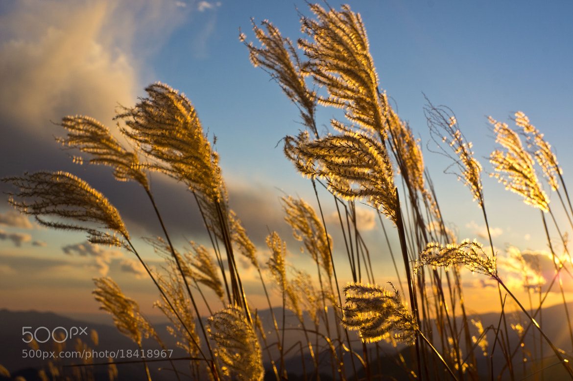 Photograph Into the wind by Luca Febbraio on 500px