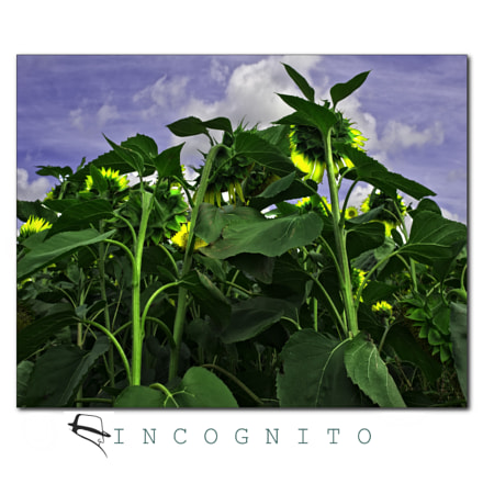 Incognito, Nikon D700, AF Zoom-Nikkor 18-35mm f/3.5-4.5D IF-ED