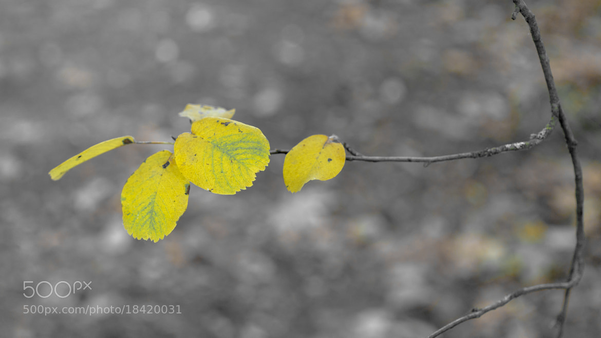 Photograph last leaves by Marc Meylemans on 500px