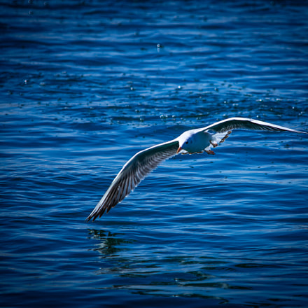 flying, Canon EOS 5DS R, Sigma 150-500mm f/5-6.3 APO DG OS HSM