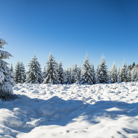 the wintry forest, Canon EOS 5D MARK III, Canon EF 28mm f/2.8
