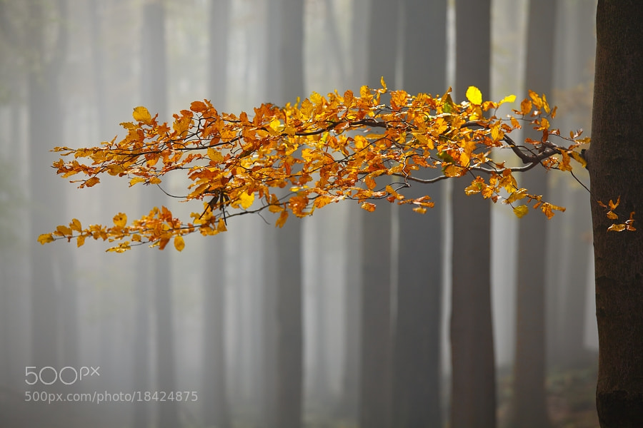 Photograph Autumn  by Daniel Řeřicha on 500px