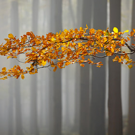 Autumn  by Daniel Řeřicha (Rericha)) on 500px.com