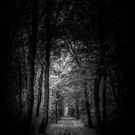 Tunnel of trees, Canon EOS 650D, Canon EF 24mm f/1.4L II