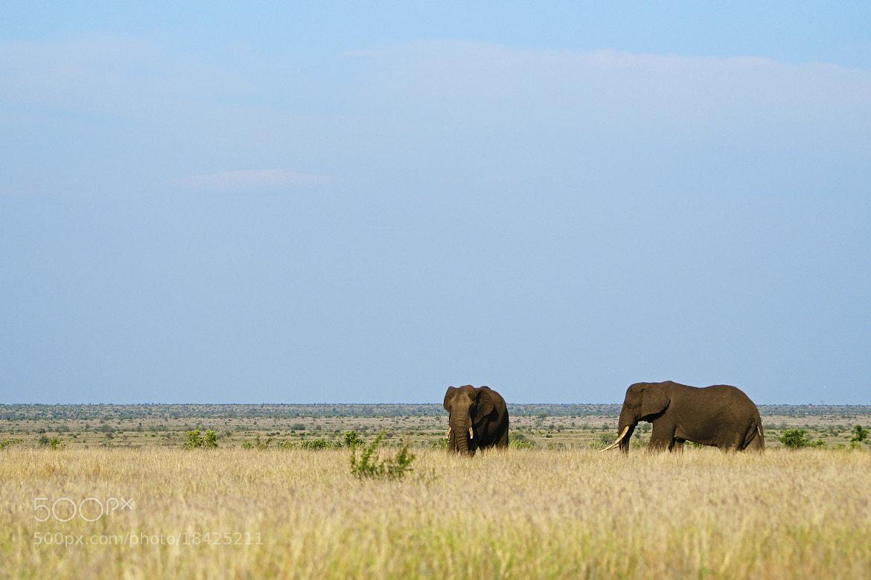 Photograph Scenic Tusker by Rudi Hulshof on 500px