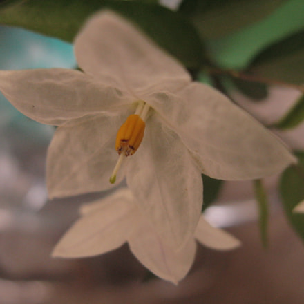 Lovely mini flower!, Canon POWERSHOT A720 IS