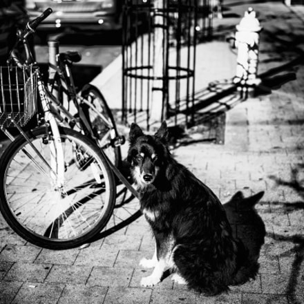 dogWitHydrant, Canon EOS 6D, Tamron SP 45mm f/1.8 Di VC USD