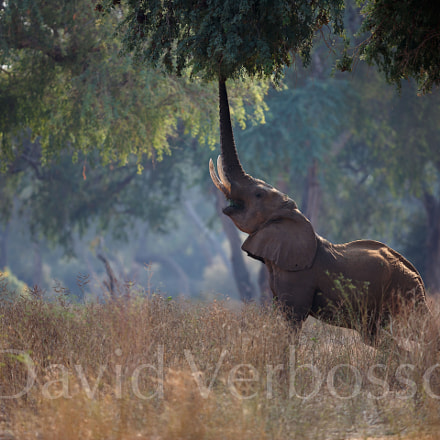 Enchanted forest elephant, Canon EOS 5D MARK III, Canon EF 400mm f/2.8L IS II USM