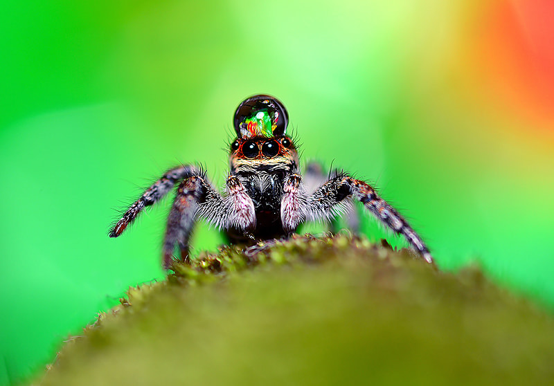 Photograph \\\..Little Spider../// by Bu Balus on 500px