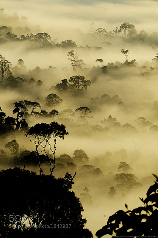 Photograph Mist of Life by nara simhan on 500px