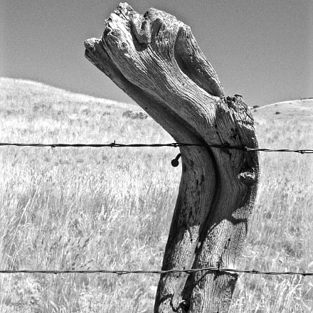 Twisted Fence Post, Canon POWERSHOT A710 IS