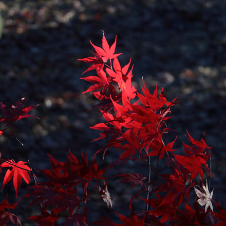Colors of Fall - 1, Canon EOS REBEL T6S, Canon EF-S 18-135mm f/3.5-5.6 IS STM