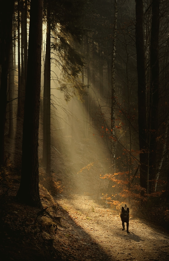 Photograph forest beast by Sebastian Luczywo on 500px