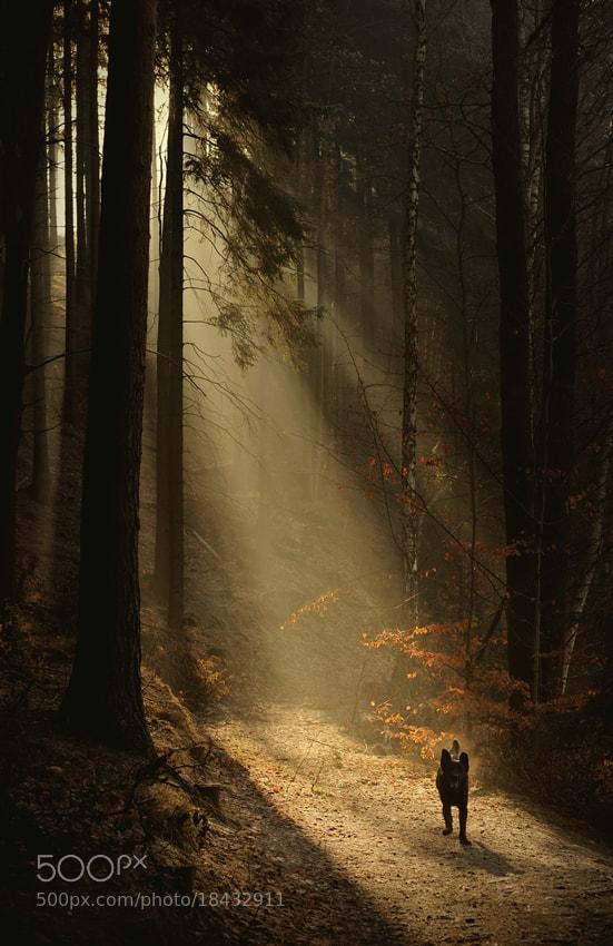 Photograph forest beast by Sebastian Luczywo on 500px