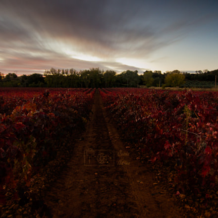 The red Wineyard, Panasonic DMC-GH3, Olympus M.Zuiko Digital ED 9-18mm F4.0-5.6
