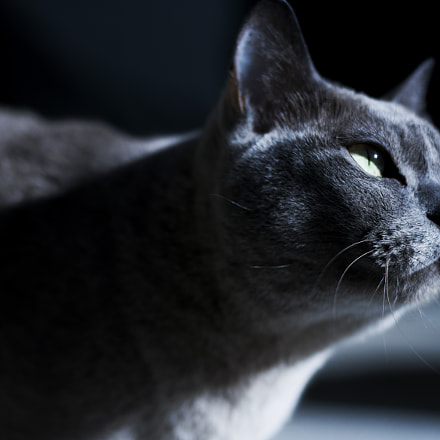 Skeeter 2, Canon EOS 30D, Canon EF 50mm f/1.8