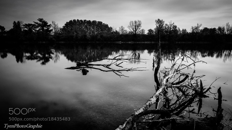 Photograph Wet tree by Vui Tyen-long on 500px