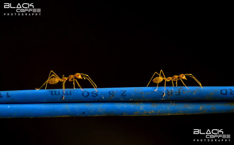 Photograph Follow the Network by Ajith Mathew on 500px