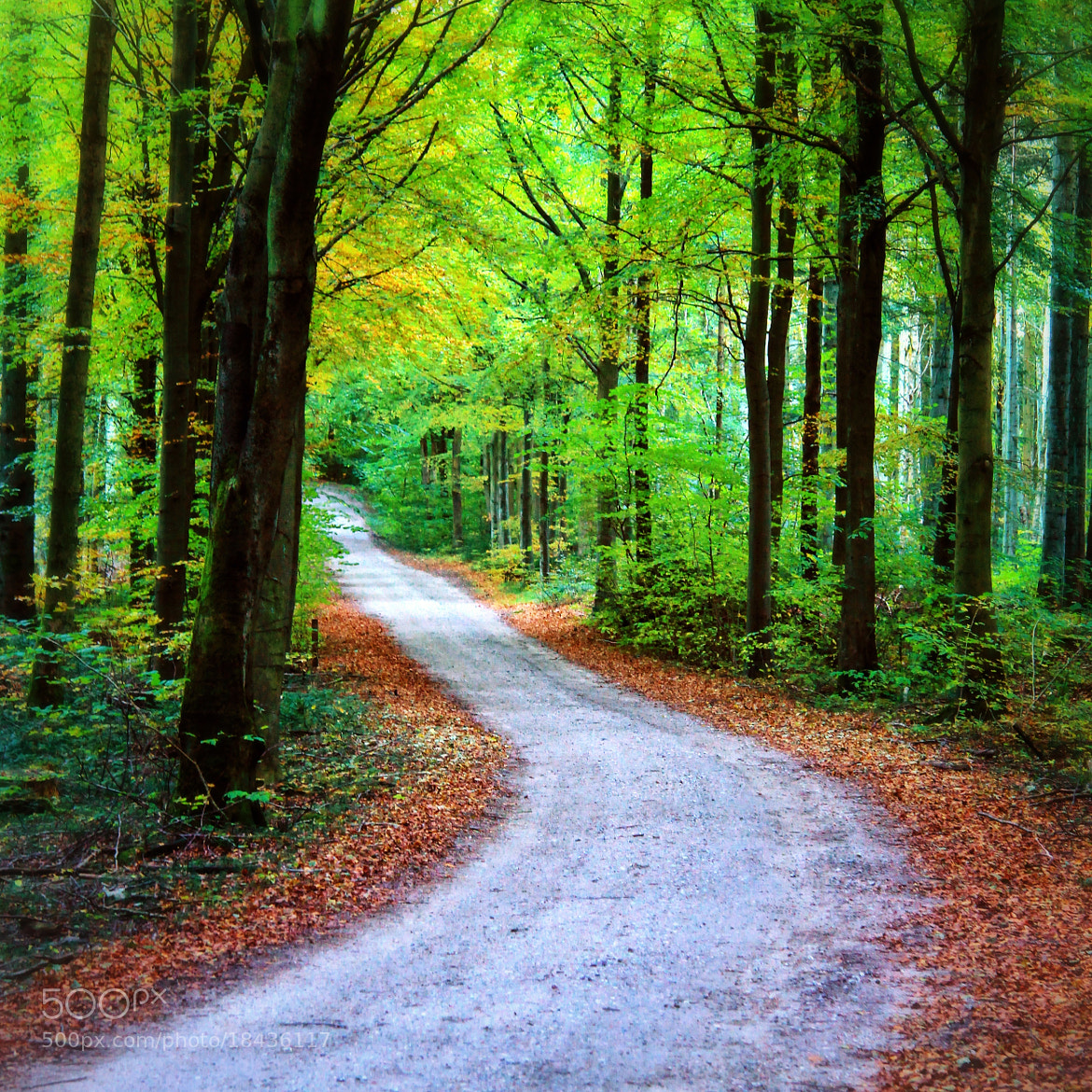 Photograph Forrest road by Joost Lagerweij on 500px