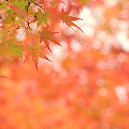 Autumn colors, Canon EOS KISS X6I, Canon EF 100mm f/2.8L Macro IS USM