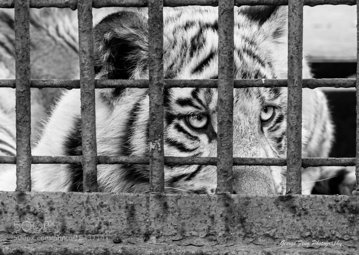 Photograph Behind The Bars by George Feng on 500px