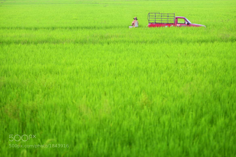 Photograph THAI PEASANT by Piya Palapunya on 500px