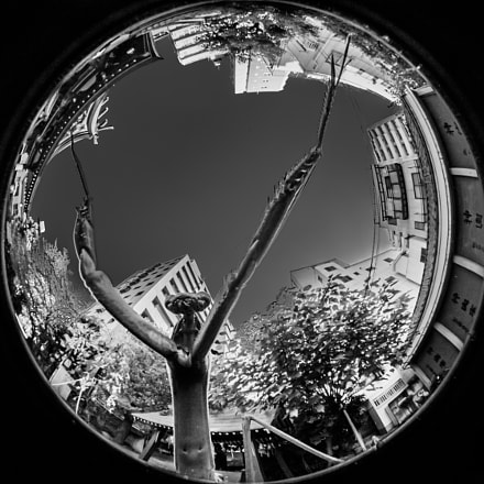 Big mantis!, Canon EOS-1D X MARK II, Sigma 8mm f/3.5 EX DG Circular Fisheye