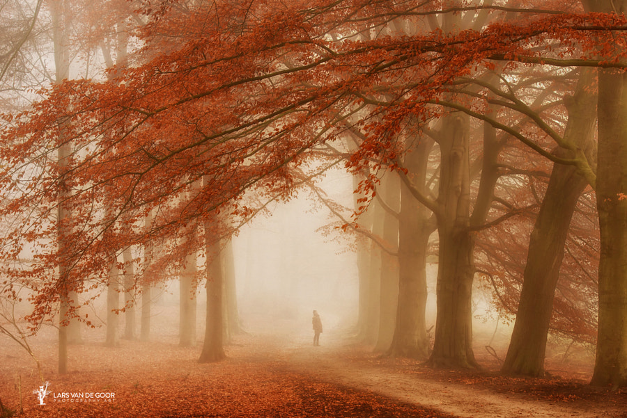 Wonderfall by Lars van de Goor on 500px.com