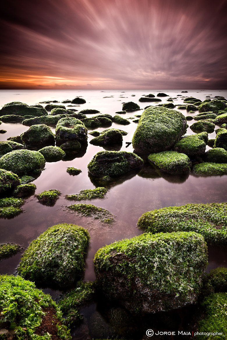 Photograph Green chaos by Jorge Maia on 500px