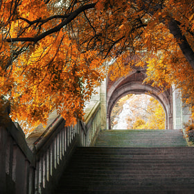 Autumn colors by Laszlo Gal (tobey15)) on 500px.com