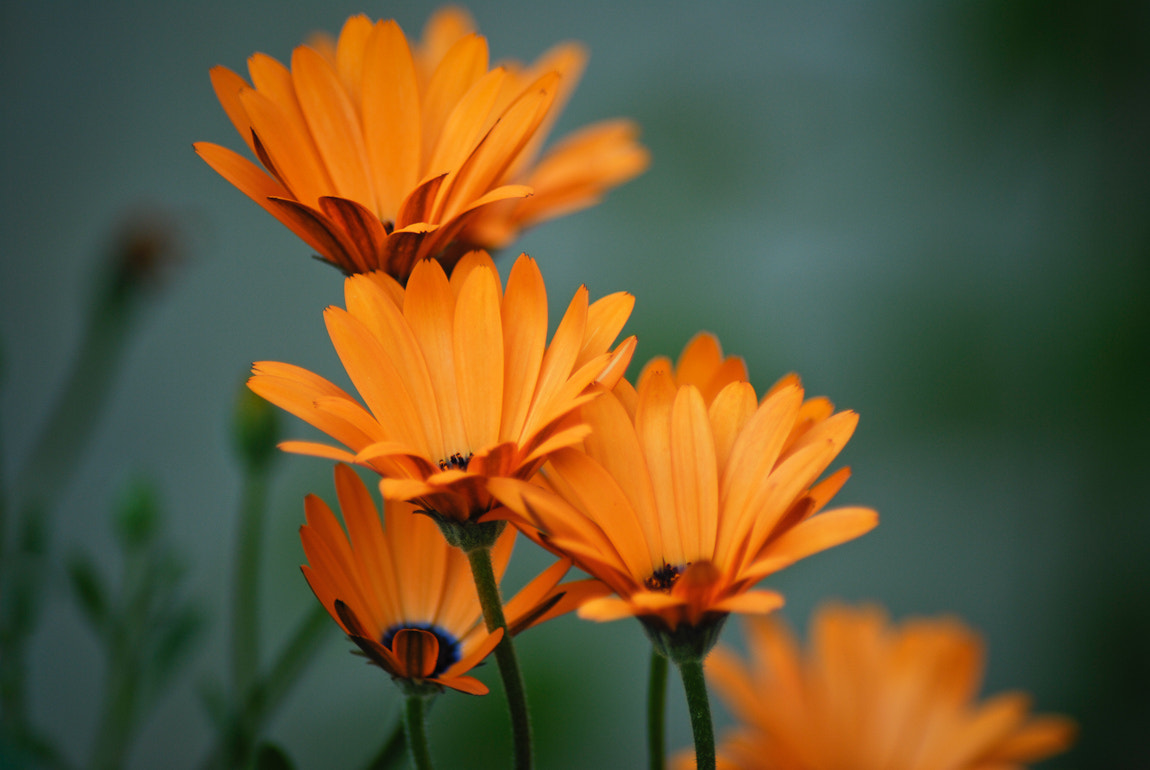 Photograph Flowers by Carsten Welzel on 500px