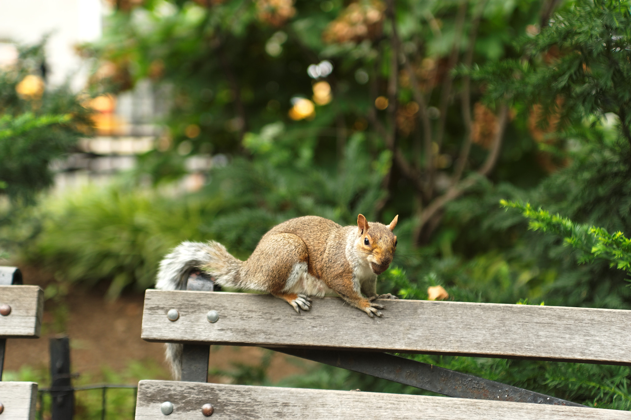 Photograph A squirrel by the break by Michael FRANCHITTI on 500px