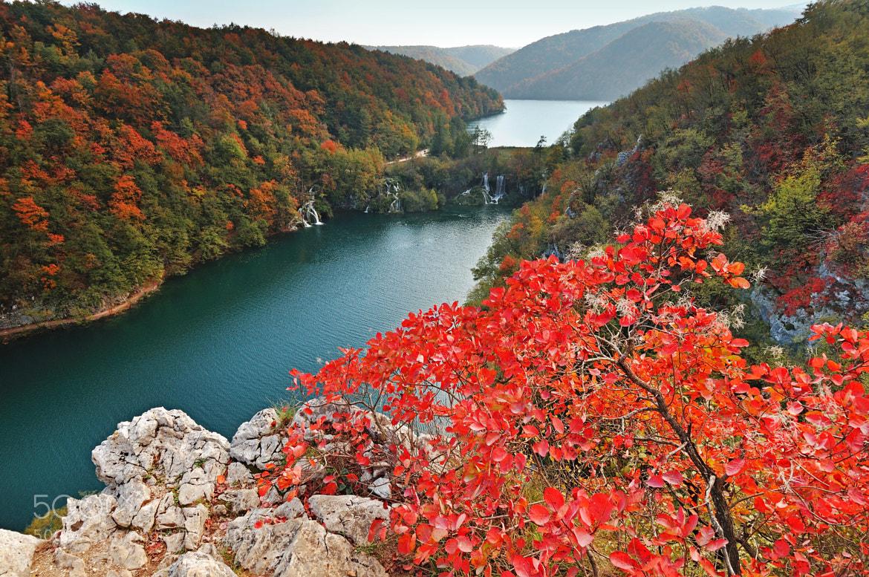 Photograph Autumn Colours by Csilla Zelko on 500px