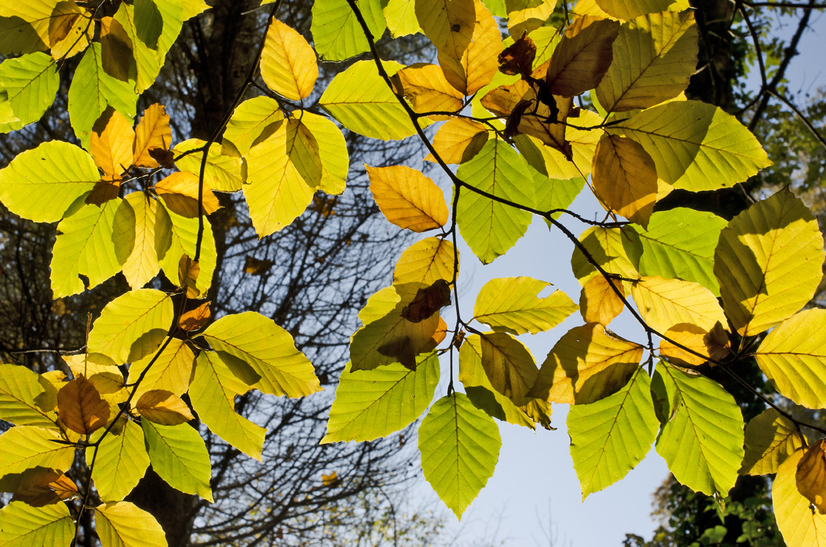 Photograph Back lit leaves by Elinor James on 500px