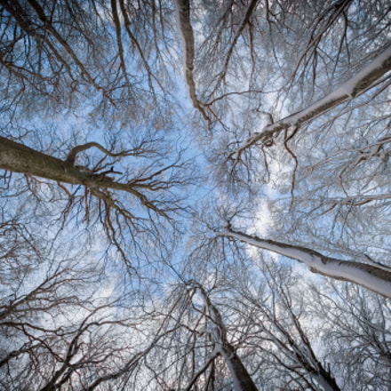 Abstract Forest, Nikon D7200, Sigma 10-20mm F3.5 EX DC HSM